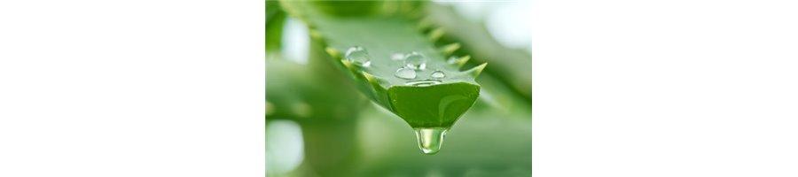 Gel hidratante y regenerante